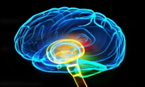 What are alpha brain waves