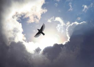 biblical-meaning-of-birds-in-dreams