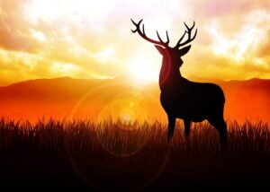 biblical-meaning-of-deer-in-dreams